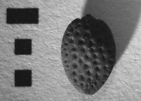 Fairbairn AA64 Figure 5