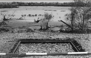 Shell mound HI81, showing excavation square overlooking saltflats (published in Australian Archaeology 59:11).