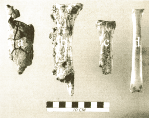Megafauna metatarsals from various sites (published in Australian Archaeology 53:20).