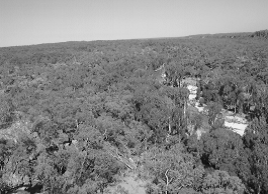 Aerial shot showing the Norman River and adjacent sandstone escarpment to the right of view (published in Australian Archaeology 59:45).