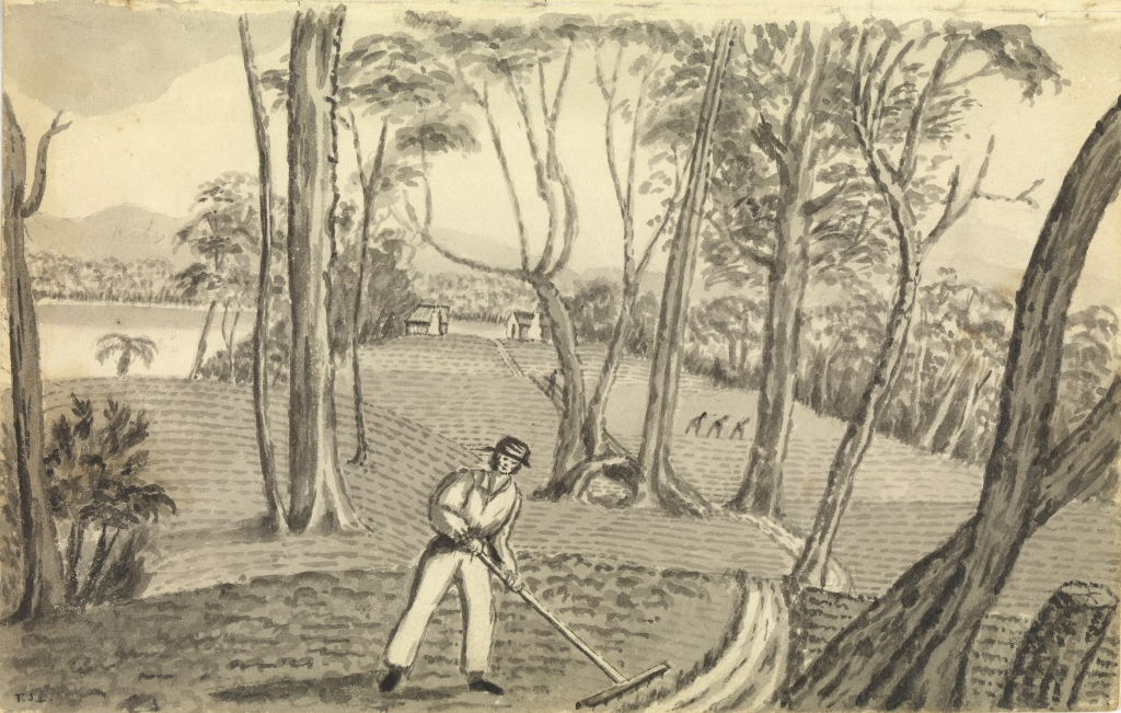 Sketch by Thomas Lempriere showing the gardens on Phillips Island, Macquarie Harbour. Though successful, the gardens required the convicts' constant labour (Courtesy of the Allport Library and Museum of Fine Arts, Tasmanian Archive and Heritage Office).