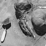 Gillman-Burials_Thumbnail